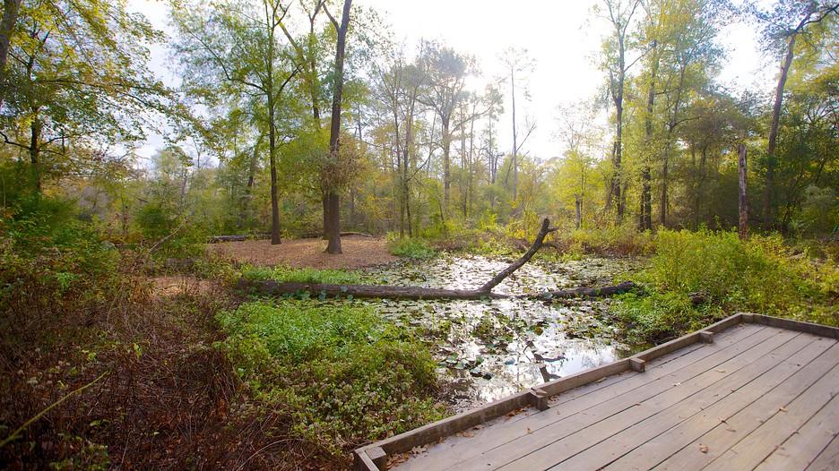 Houston Arboretum and Nature Centre