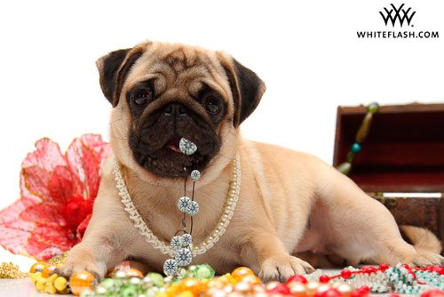 Dogs Love Diamonds Too